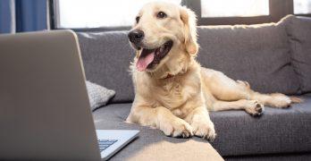 Hundeversicherung: Darauf kommt es an